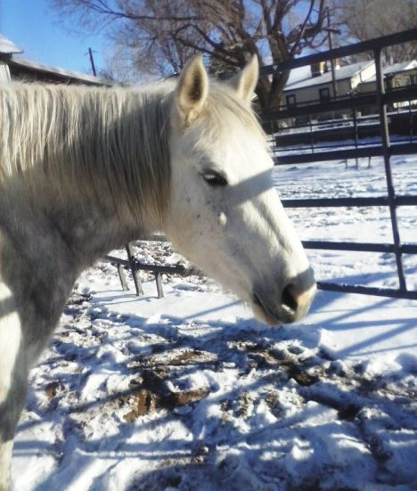 My Horse Sally